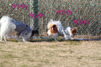 kashiwa_100110_060
