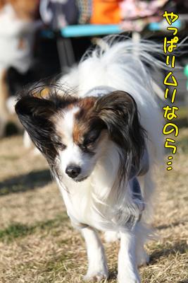 kashiwa_100110_074
