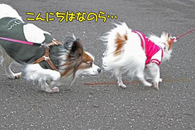 kashiwa_100211_004