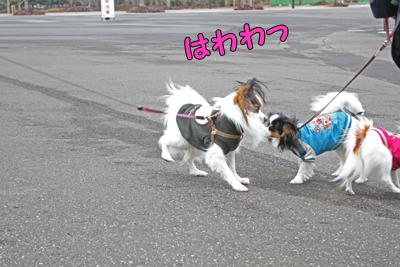 kashiwa_100211_005