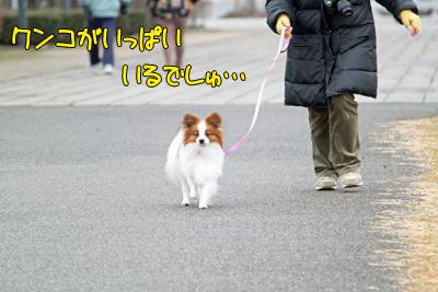 kashiwa_100211_018
