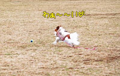 kashiwa_100211_021