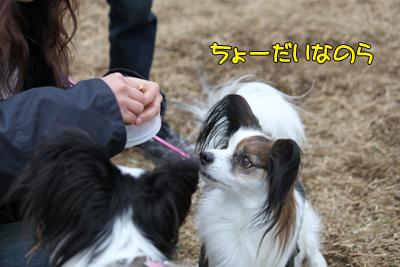 kashiwa_100211_031