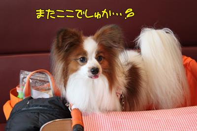 kashiwa_100211_042