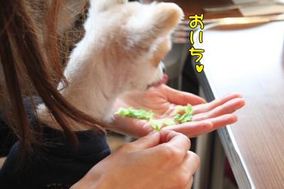 kashiwa_100211_057