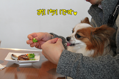 kashiwa_100211_059