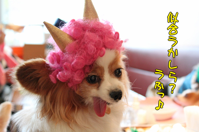 kashiwa_100211_075