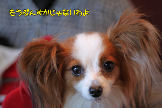 kashiwa_101223_001