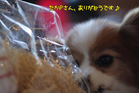 kashiwa_101223_024