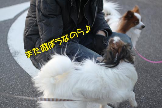 kashiwa_101223_044
