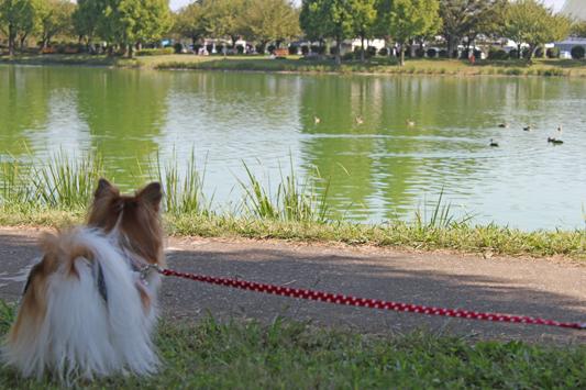 kawagoe_park_007
