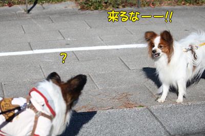 odaiba100130_007
