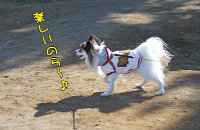 odaiba100130_011