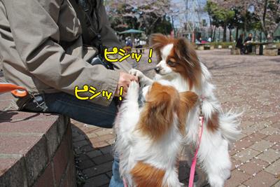 sakichi&kateP2_007