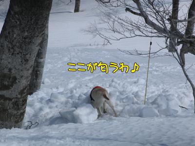 tanigawa_036