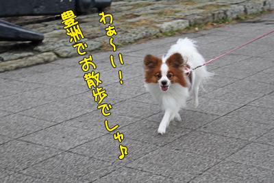 toyosu100306_004
