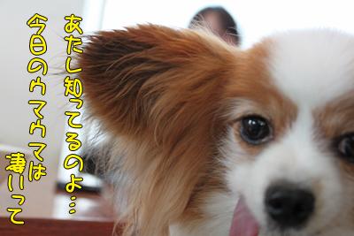 toyosu100306_025
