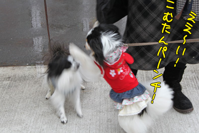 toyosu100306_066