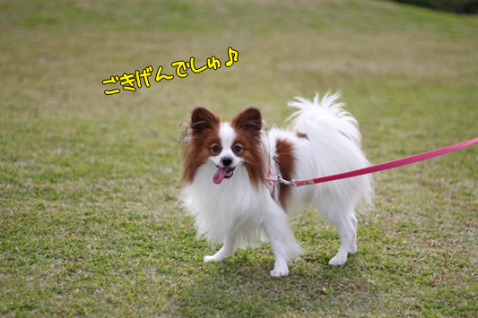 toyosu101107_002