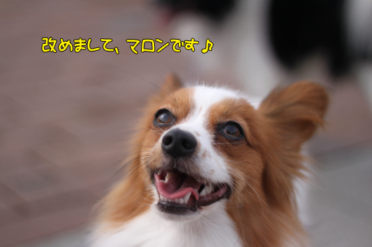 toyosu101107_005