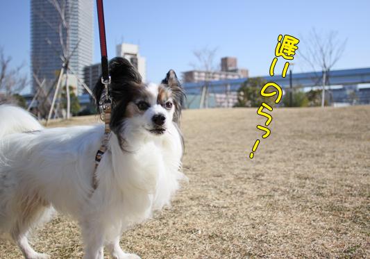 toyosu110122_006