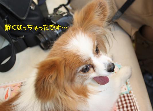 toyosu110122_035