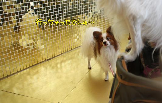 toyosu110122_040