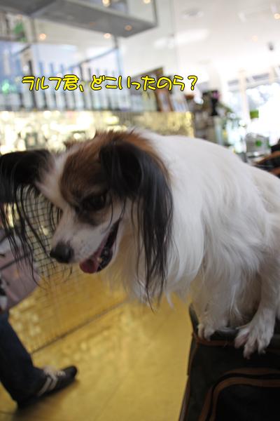 toyosu110122_049
