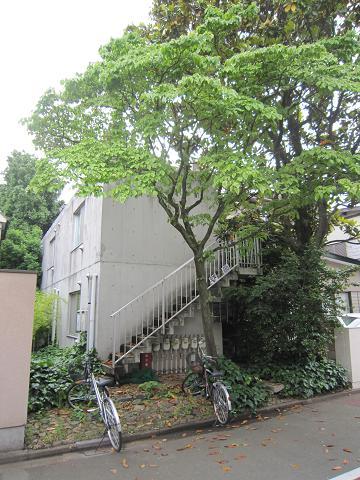 緑のアパート