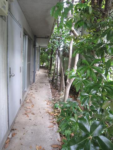 緑のアパート2