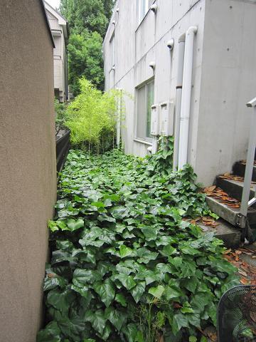 緑のアパート3