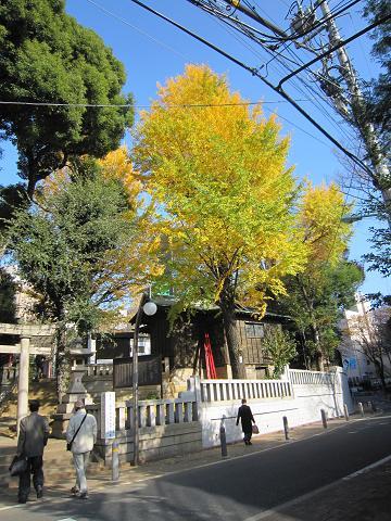 渋谷のイチョウ