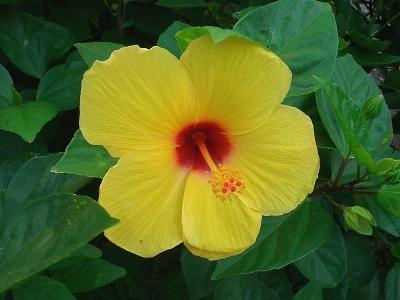 h-flower.jpg