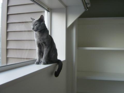 ニコライの窓1(2008.06.05)
