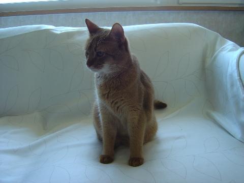 ジョゼフィンちゃんおすまし(2008.07.26)