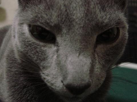 コアラに似てる?(2008.07.31)