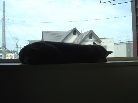 ニコライの窓3(2008.08.13)