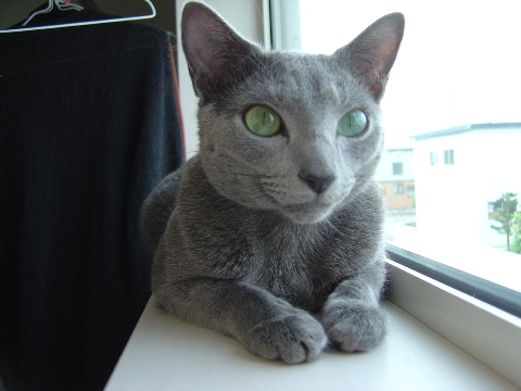 ニコライの窓4(2008.08.13)