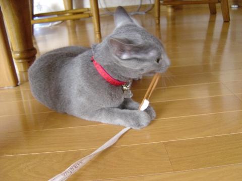 びよ~ん(2008.08.14)