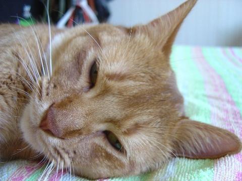 もう寝るのよっ(2008.08.17)