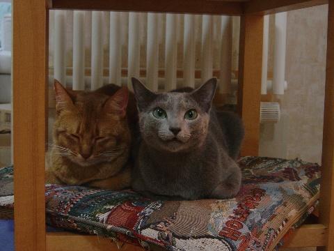 なかよし座布団(2008.08.17)