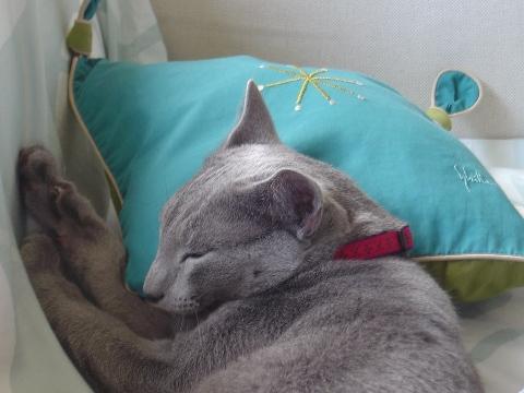 シビラの枕!(2008.08.18)
