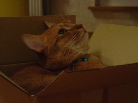 ちょうどいい箱なのよっ(2008.08.21)
