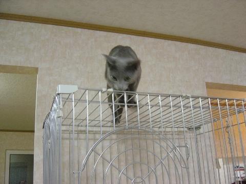 ケージの上さ!(2008.08.26)