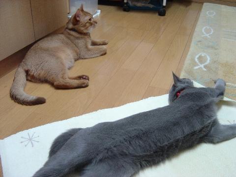 のび~(2008.09.01)