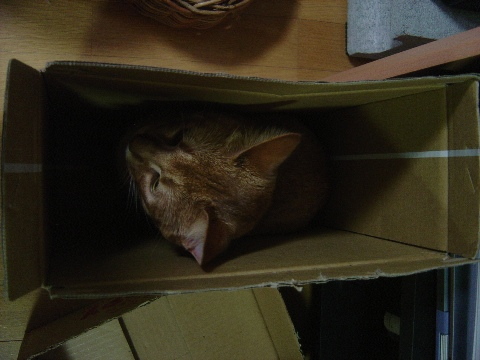 すっぽりと♪(2008.09.02)