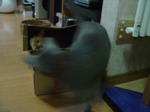 疾風のように!(2008.09.02)
