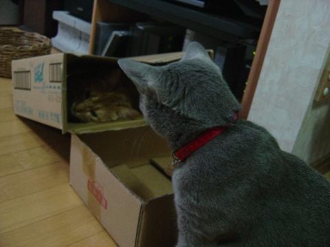 もう~~~!なのよっ(2008.09.02)