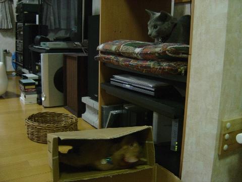 あ~んもうっ!なのよっ(2008.09.02)
