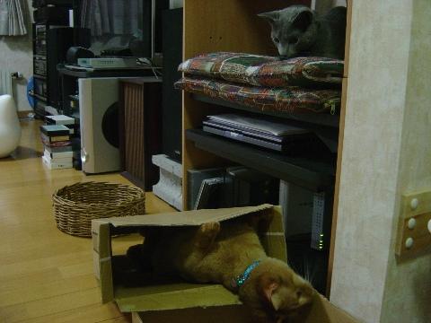 いなばうわーなのよっ(2008.09.02)